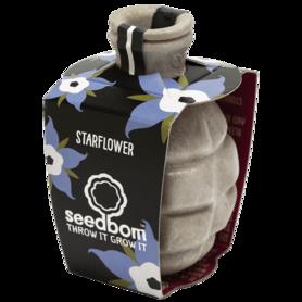 Zaadbom - Starflower