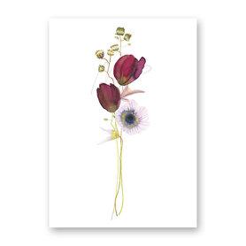 Wenskaart - Tulipe & anemone