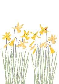 Wenskaart Daffodils